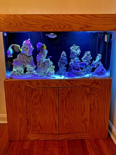 Clear-for-Life Acrylic Uniquarium with Oak Stand and Canopy 90 gallons