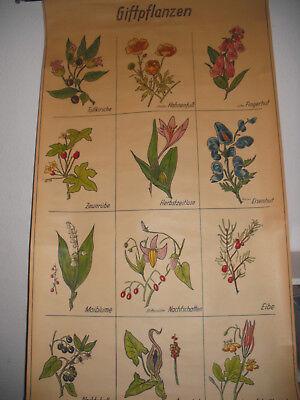 "Vintage Lehrkarte / Schulwandkarte:"" Giftpflanzen """