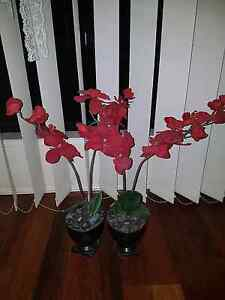 Gorgeous red orchid fake artificial plant flowers Pacific Pines Gold Coast City Preview