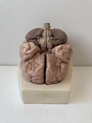Somso Brain Model 8 Parts Anatomical Model Bs20 Vintage