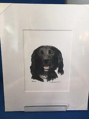 Fine Art Print Of Black Dog Coloured Pencil By Linda Brand