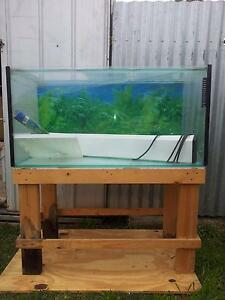 3ft Fish Tank Echuca Campaspe Area Preview