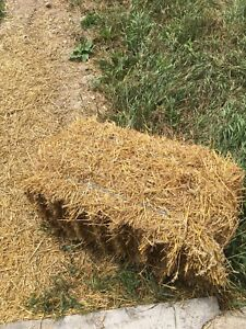Small straw squares bales 2018