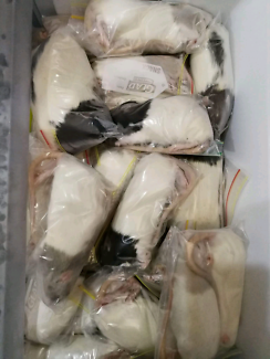 Frozen Rats - Reptile Food - all sizes - cheap