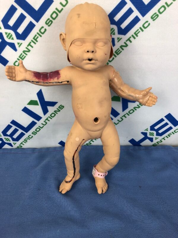 VATA NITA Newborn / Baby Anatomical Model