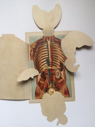 3 Boards --1884 Human Anatomy Boards w/ Layered Fold Out Body Info