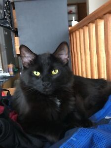 Female cat to good home