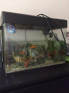 Blue Planet Fish Tank 50L Applecross Melville Area Preview