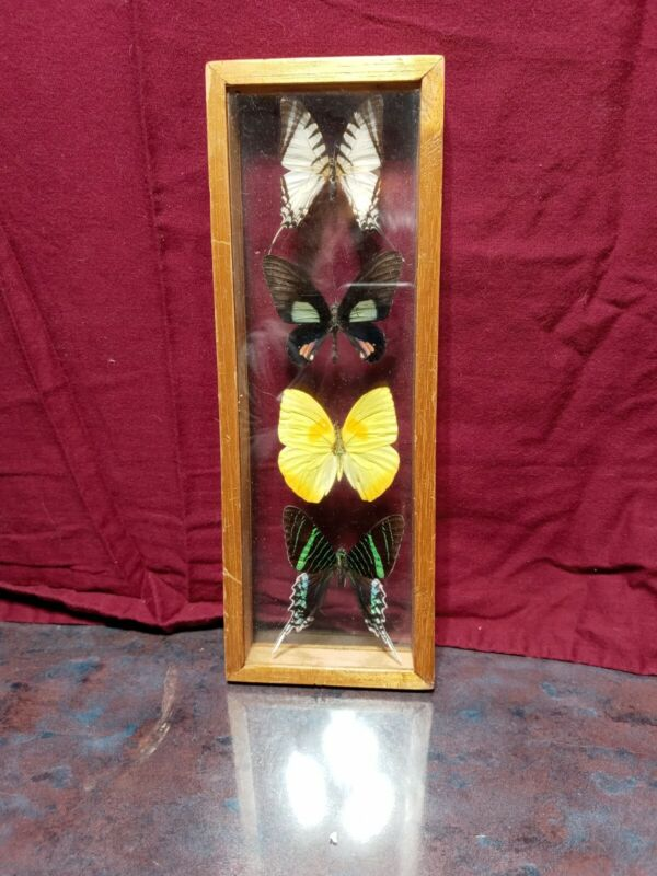 Vintage Wood Framed Butterfly Mounts
