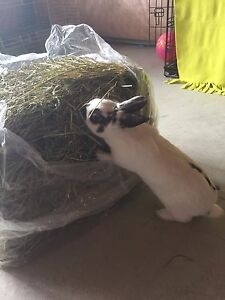Hay for small animals! Fresh from farm! Timothy Hay