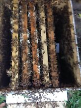 NUC bee hive for sale- Barden Ridge Sutherland Area Preview