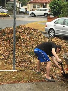 Free Mulch - pickup only Daceyville Botany Bay Area Preview