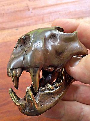 Bronze Saber Tooth  Skull Head Sculpture Statue Figure Skeleton All Metal