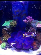 Marine aquarium Aquareef 195 (price drop) West Beach West Torrens Area Preview