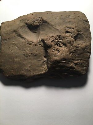 Fossil Stone from Ohio, USA