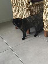 Loveable Cat needs new home Browns Plains Logan Area Preview