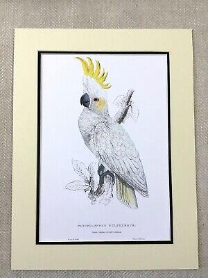 Not RSPB BirdLife Australia Pin Badge Sulphur-crested Cockatoo