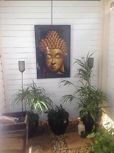 Studio in Dorrigo for Rent Thora Bellingen Area Preview