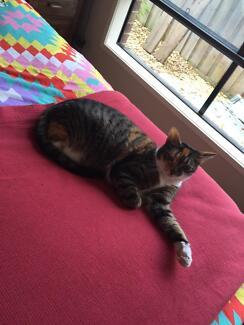2 beautiful cats needing a new home Prahran Stonnington Area Preview