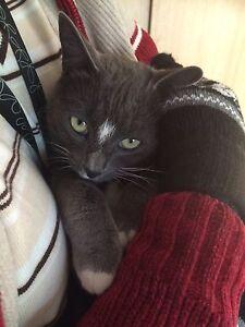 Neutered, lovely female pet cat Wagga Wagga Wagga Wagga City Preview