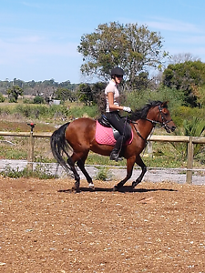 Australian riding pony Clarkson Wanneroo Area Preview