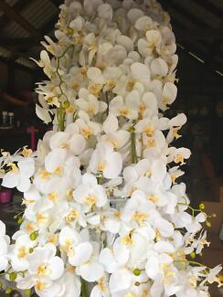 Flowers orchid silk artificial wedding event arch for hire