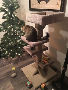 Scratching post (full size $200 2 month ago) - comes with cat! Prince George British Columbia image 7