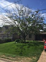 Tree removal and tree trimming, low prices!