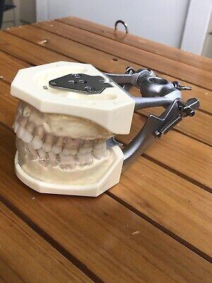 Kilgore Dental Dentoform Perio - Periodontics Student Dentoform