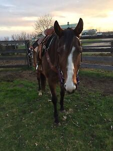 2005 Thoroughbred Mare (un raced/not off the track)