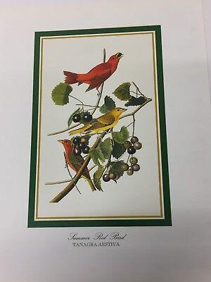 Audubon - SNOWY OWL - 25.5 cm x 19.5 cm  Vintage Art Bird Print STRIX NYCTEA