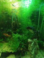 Aquarium Pflanzen aus gesundem Becken gerne Tausch Sachsen - Kitzscher Vorschau