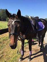 horse for sale Yarramalong Wyong Area Preview