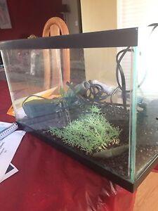 5 Gallon Aquarium Kit