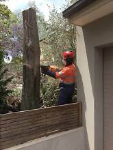 Tree lopping  services Sydney City Inner Sydney Preview