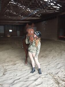 Horse riding in exchange for barn work