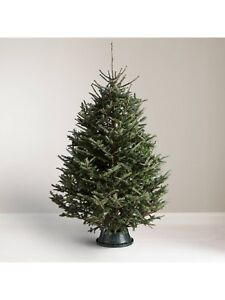 DELIVERIES TONIGHT! FRESH Christmas tree delivered to your door