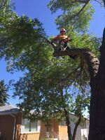Storm Damage/Tree Pruning and Removals