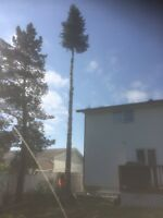 Tree removal, pruneing and stump grinding
