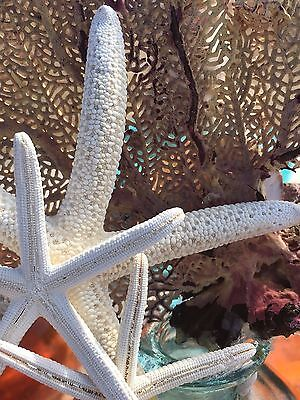 SeaFan, Coral & Starfish bottletoppers made with Aloha!