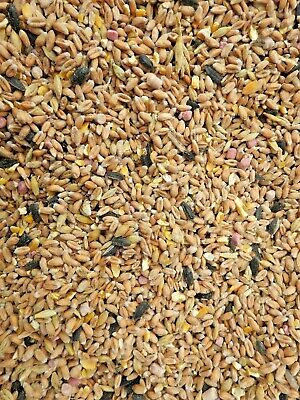 Wild Bird Seed - All Year Mix 1kg plus Sunflower hearts 1kg - Free Delivery