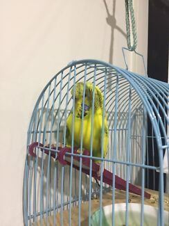 Budgie , cage & food bowl !!!
