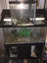 3ft fish tank Maitland Maitland Area Preview