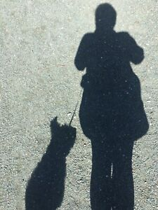 Looking for a pet sitter - CBS