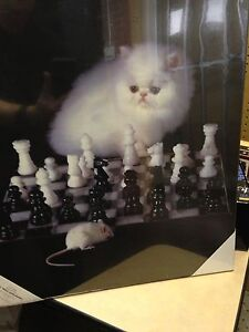CAT AND MOUSE PLAYING CHESS