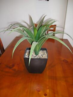 Artificial Pot Plant Hornsby Hornsby Area Preview