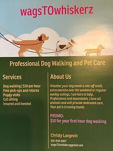 Professional Dog Walker/Sitter