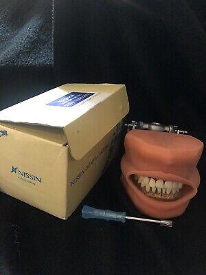 Kilgore International Nissin Typodont Tr.56c Clear Gingiva Dental Model