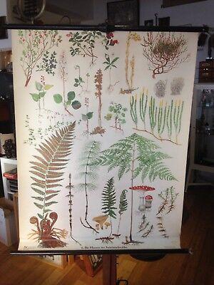 Schulwandkarte Rollkarte Die Pflanzen des Mischwaldes