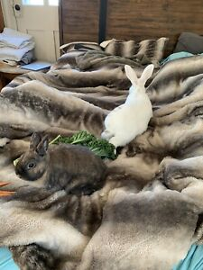 Two bonded bunnies *FREE*